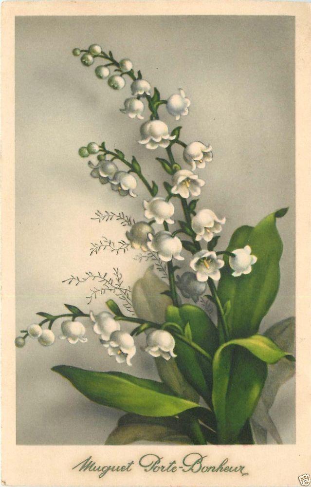 Vintage Postcard Early flowers postcard - Muguet Porte Bonheur