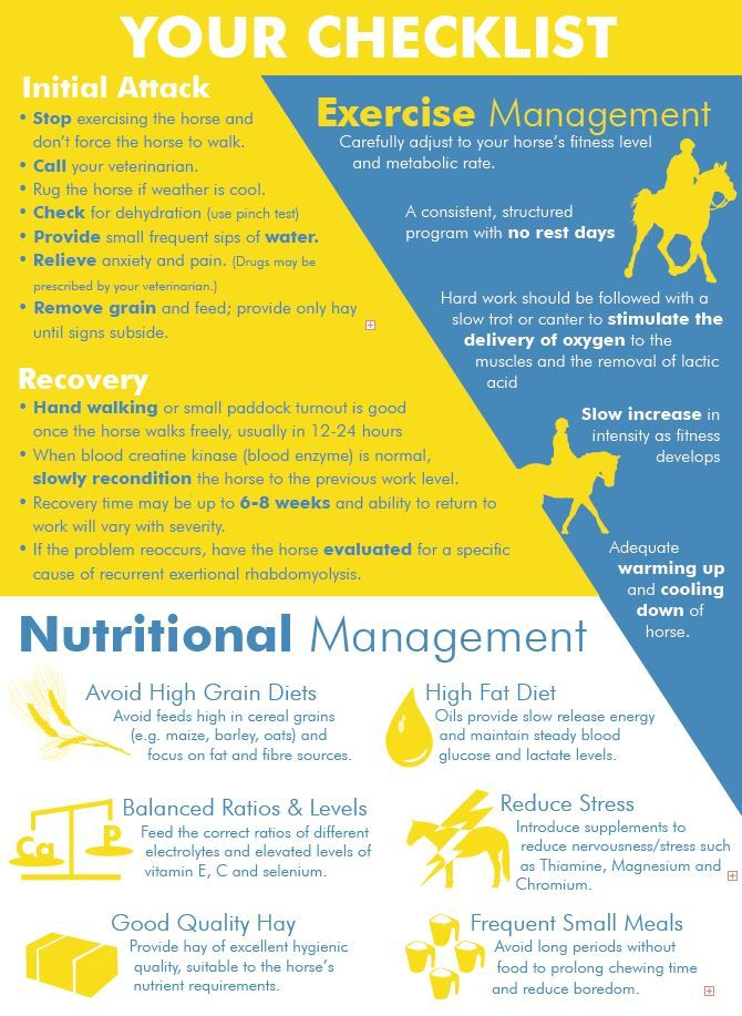 555 best Horse care and training images on Pinterest Horses - free fact sheet