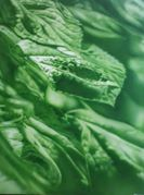 Zöld világ - Green World