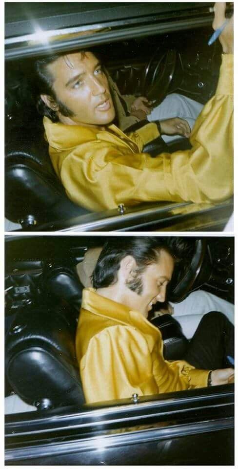 Elvis looking gorgeous!  photos by Sandi Miller