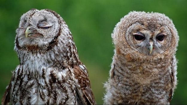 OWL AIN'T PUTTING UP WITH SNOBS | Community Post: 20 Owls That Can't Get Any Respect