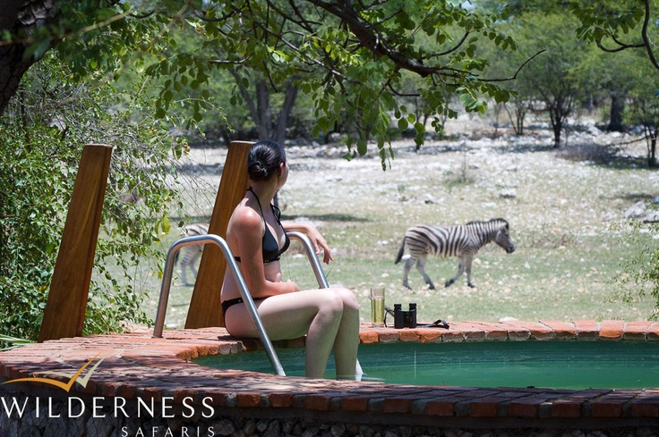Andersson's Camp - Wildlife visits the camp waterhole on a daily basis, and spending time at the pool during the afternoons is a great way to enjoy the siesta. #Safari #Africa #Namibia #WildernessSafaris