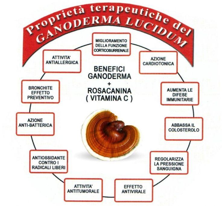 Il fungo Ganoderma Lucidum ha tanti benefici. Le proprietà del Reishi sono un valido rimedio naturale per la tua salute. In questo articolo del blog scoprirai quali sono. Leggi con attenzione questo articolo perchè la tua salute merita. Il tuo corpo ti ringrazierà.