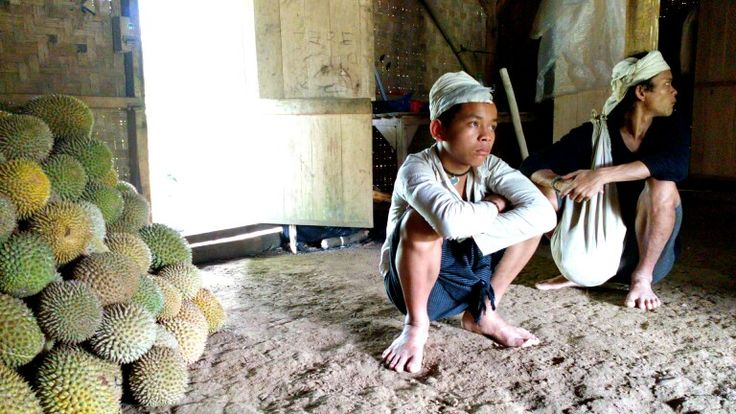 Baduy persons and durian, @Banten, Indonesia