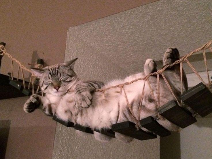Das Katzen-Burger Bett Ein mini Schlafzimmer für Katzen Das perfekte Bücherregal für Katzen Die Indiana Jones Katzen-Brücke Der ultimative Katzentisch Das Katzenkratz-Regal