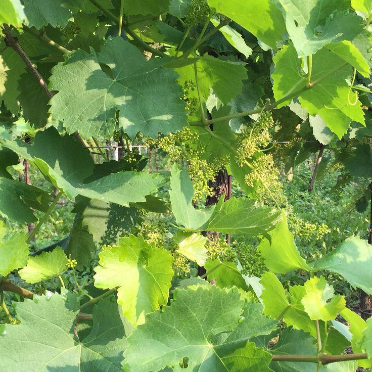 #19dibabo #19dibaboevents #wine #prosecco #white #sparkling #fioritura