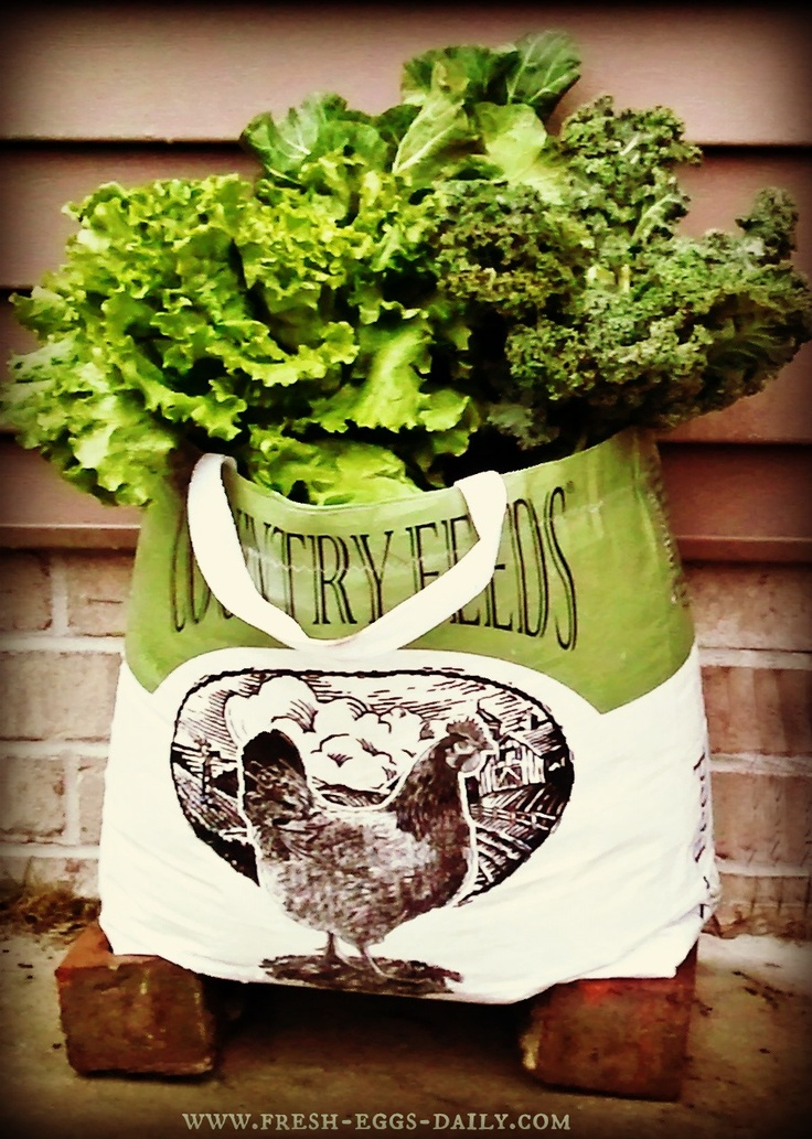 Fresh Eggs Daily: Container Gardening in a Repurposed Feed Bag