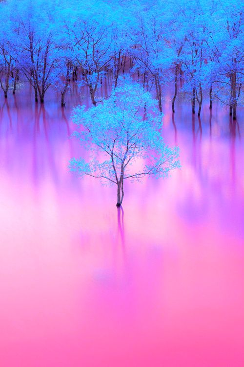 blue tree surreal photo pink water
