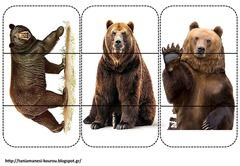 puzzle d'ours