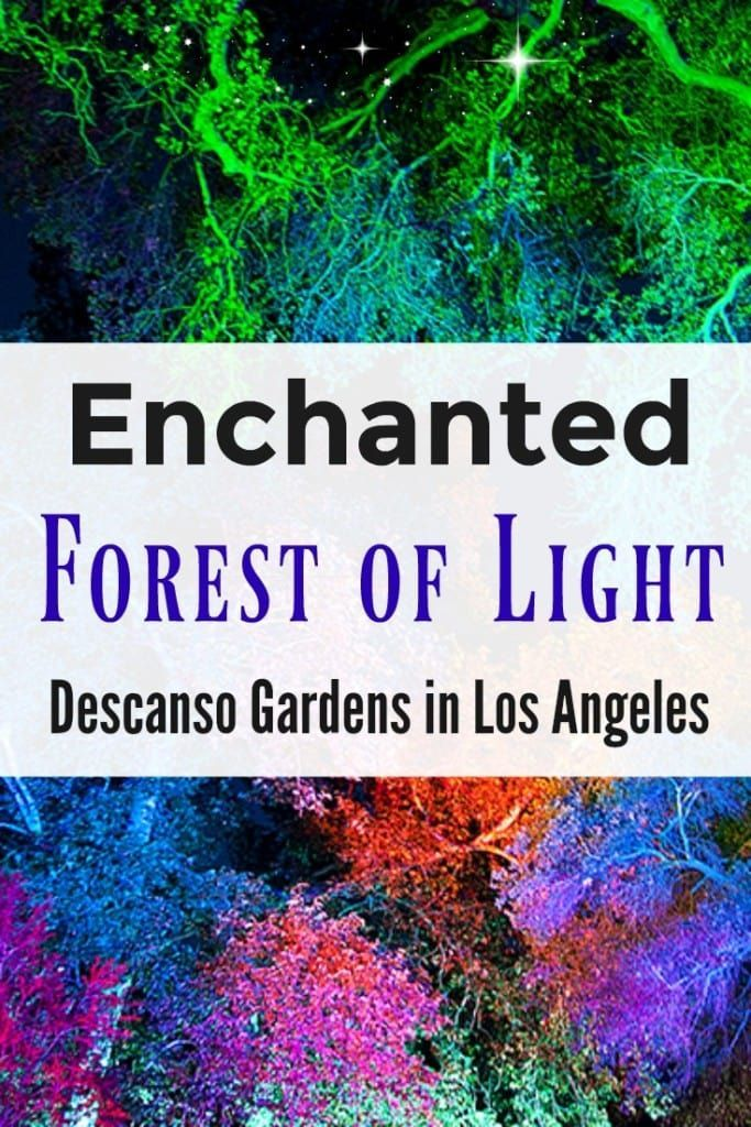 This holiday season, Descanso Gardens in Los Angeles, California will be transformed into Enchanted Forest of Light - an interactive, nighttime experience, featuring a one-mile walk through 8 distinct lighting displays in some of the most beloved areas of the gardens. #holidaytravel #travel #christmas #familytravel