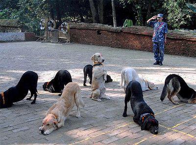 downward dogs...