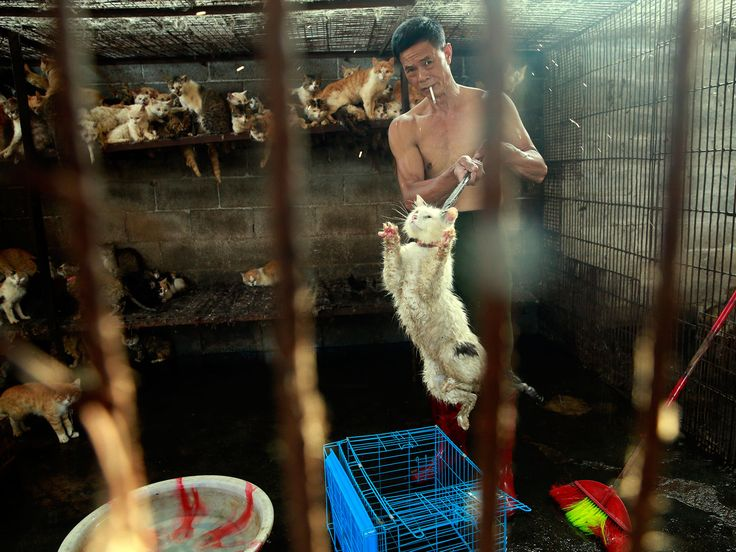 Animal welfare campaigners have restarted a petition against the slaughter of thousands of cats and dogs marking the summer solstice in Yulin, China.