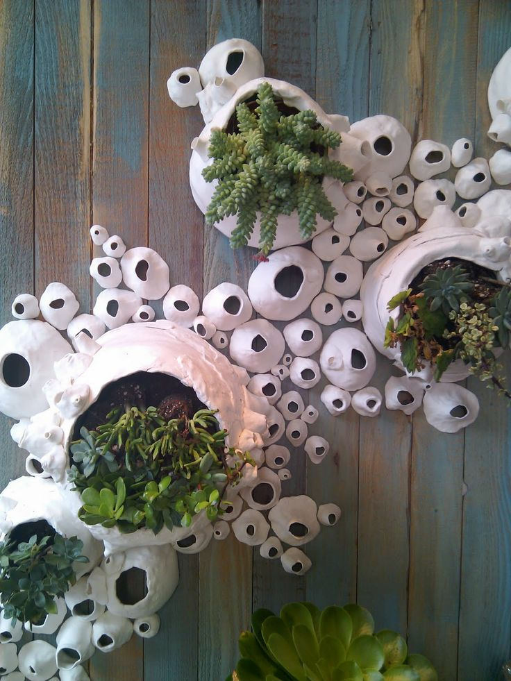 Anthropology Display Of Succulents In Handmade Barnacle Wall Hanging.