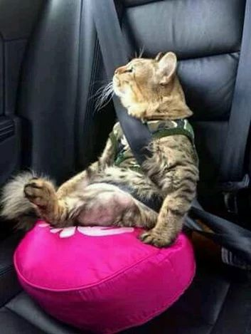 Don't you hate it when the seat belt cuts right across your neck? I like the pillow, though. I can see out the window now!
