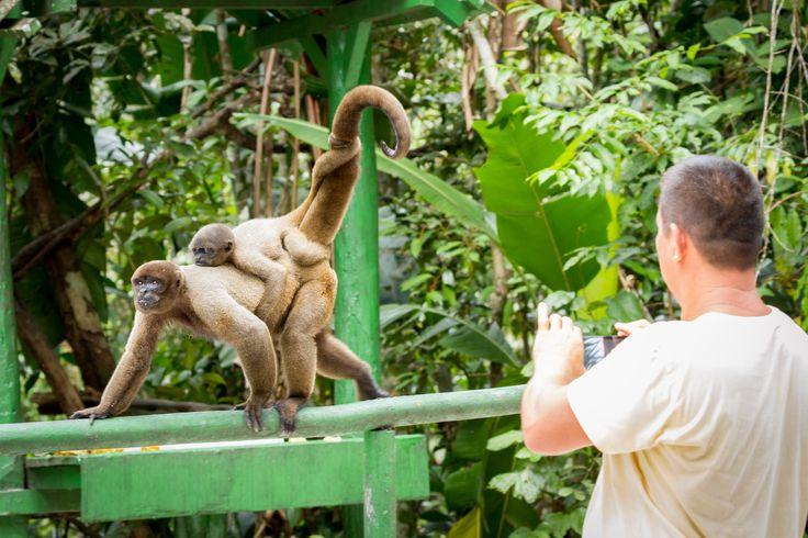 Floresta dos Macacos, é uma área restrita onde os animais selvagens vão e vem enquanto as estações passam. Fica às margens do rio Tarumã, afluente do rio Negro, no estado do Amazonas, Brasil.