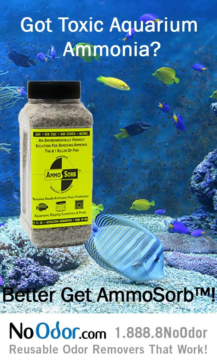 1000 images about aquarium ammonia remover on pinterest for Fish tank odor eliminator