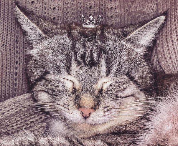 Кольца-короны придают величесвенный и важный вид всем! Даже котикам;)