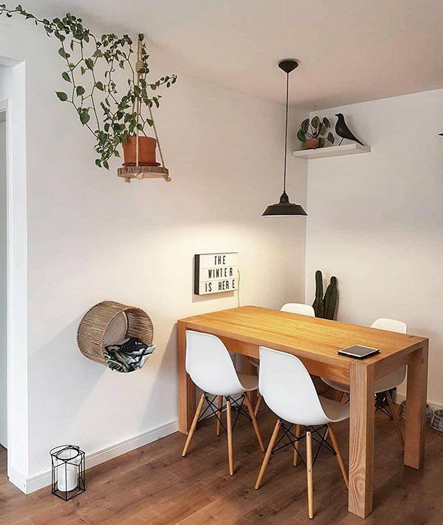 Sou apaixonado na sala do @apartamentodehomem  Olha a ideia pro bichano utilizando uma cúpula de abajur! #ideiasdiferentes  Confiram @decorecomcharme | #grupojsmais