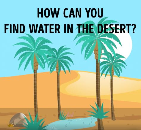how to find water in the desert with a stick