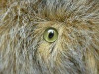 Glasaugen, Katzenaugen, mattgrün hintermalt mit schwarzer Schlitz-Pupille, Paar