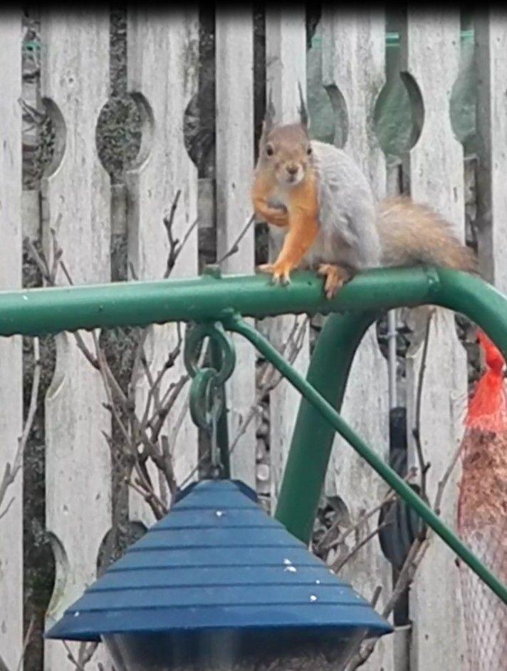 Orava. Kuva 4. 17.04.2015.