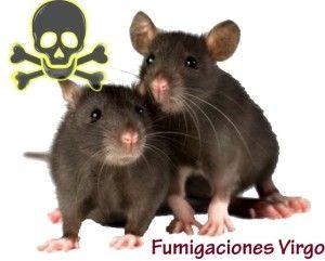 109 mejores im genes sobre fumigaciones en pinterest - El mejor veneno para ratones ...