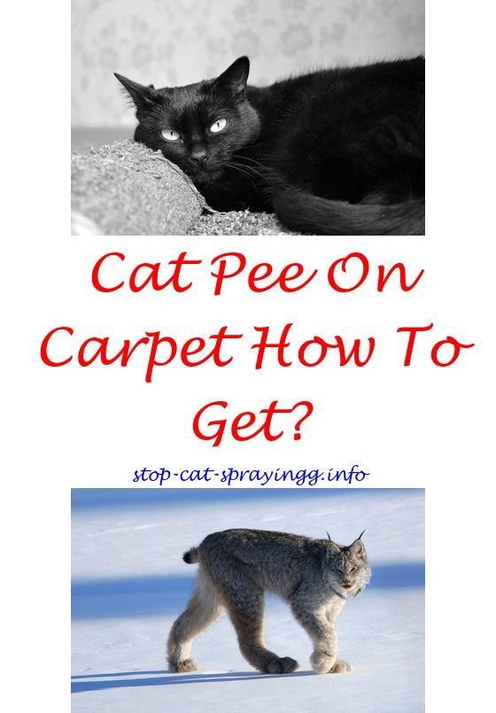 What Does Cat Spray Look Like Cat Pee Cat Pee Smell