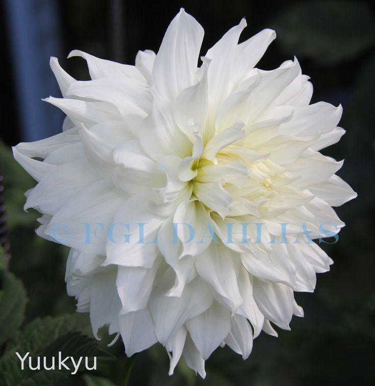 Yuukyu