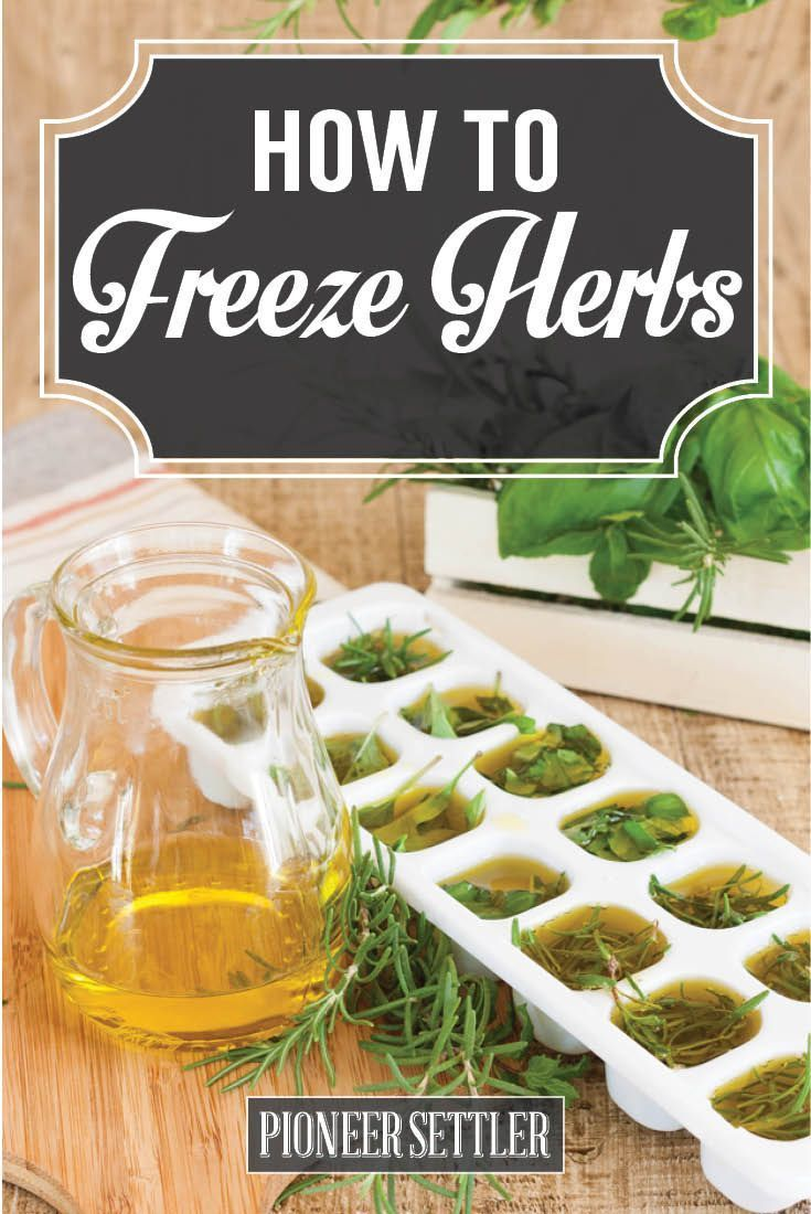Check out Freezing Herbs with Olive Oil for Long Lasting Flavor | How to Freeze Basil at http://pioneersettler.com/freezing-herbs-freeze-basil/