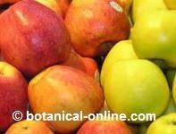 manzanas para la dieta de la diverticulitis