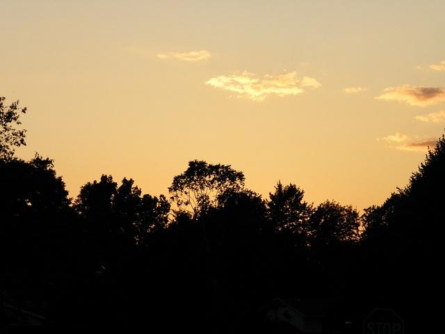 Silhouettes - By John M. Humphrey: Silhouette, Photo