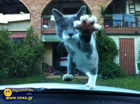 Γάτες σε απίθανες και αστείες φωτογραφίες της κατάλληλης στιγμής (3)