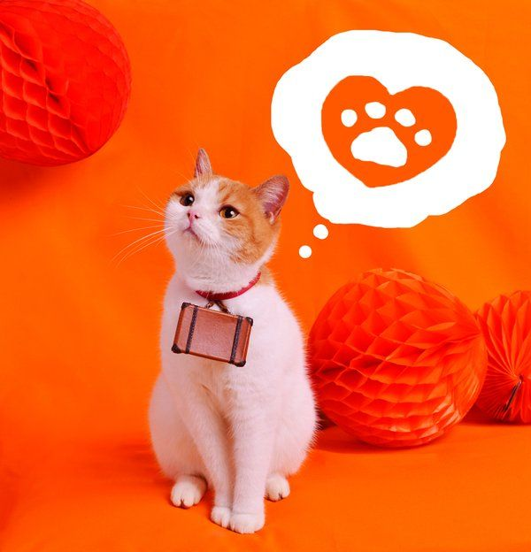 にゃらん @nyalan_jalan 4月14日 オレンジ旅をプレゼント…にゃ〜んて いいかもにゃ〜 http://www.jalan.net/news/article/80114/ …