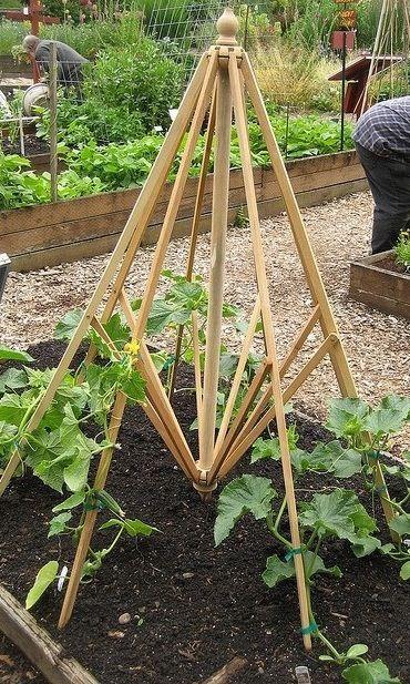 Reuse picnic table umbrella frame as trellis