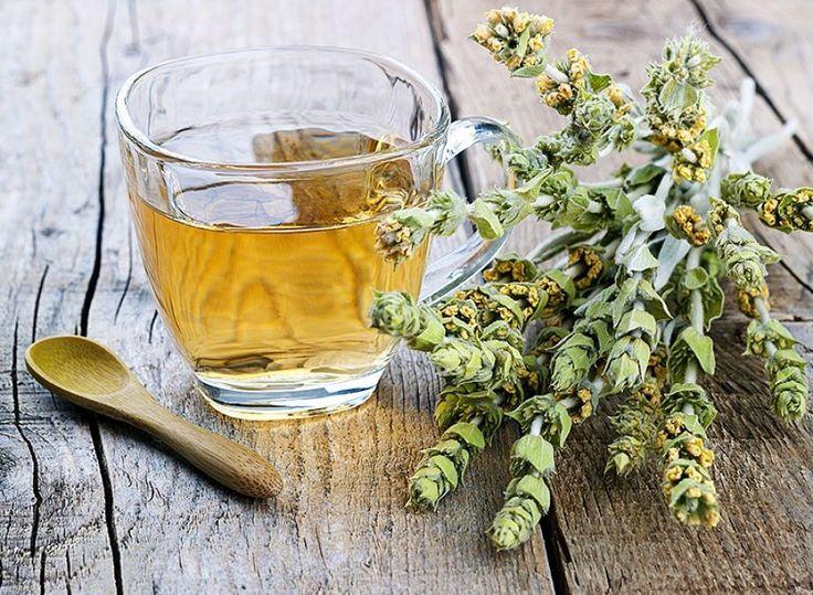 Πρόληψη και θεραπεία του καρκίνου με ελληνικά βότανα
