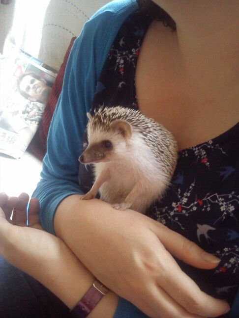 My sister holding my friend's pet African hedgehog, Dylan.