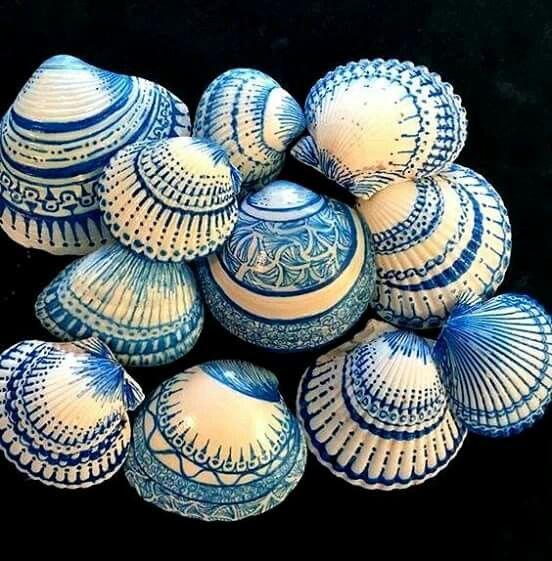 Deniz kabukları...