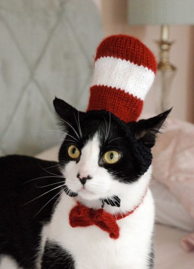 28 Halloween Costumes For Cats That Will Put A Smile On Your Face | PlayBuzz