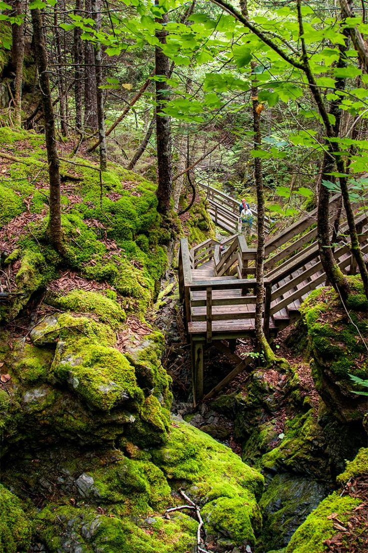 The Dickson Falls trail at Fundy National Park is easy, except there are many stairs