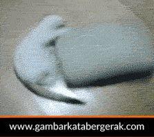 Gambar animasi binatang lucu bergerak, kucing mainin bantal lucu :D