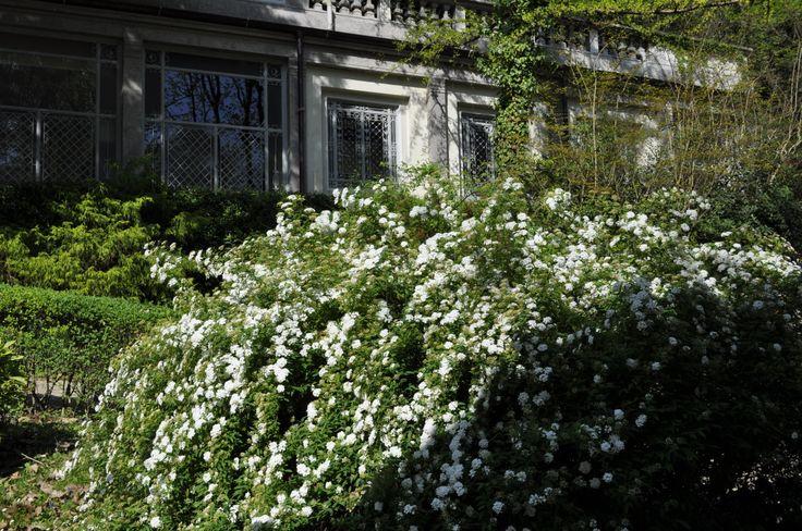 #terme #parco #fiori #primavera