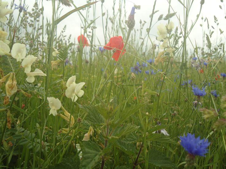 Wild flowers, photo taken by myself