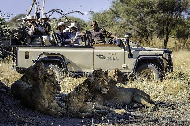 Pride of lions in the Okavango Delta