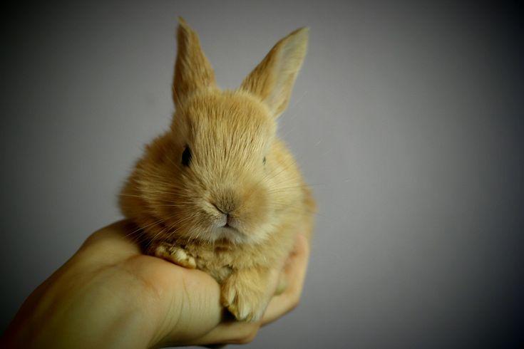 Ecco per voi quindi 5 gabbie per conigli e criceti che li faranno sentire come in un hotel a 5 stelle. Scopritele su Animali Pucciosi