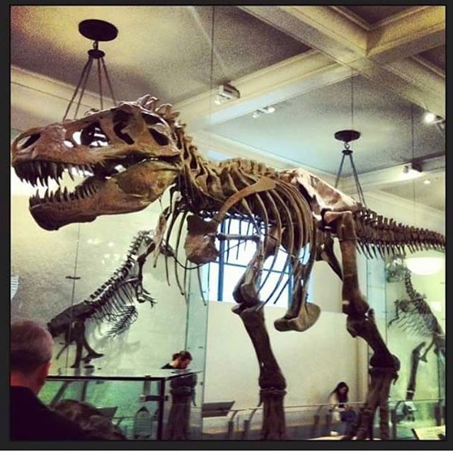 #52days52museums #day13 @amnh #bigmuseumstar #regram #insideamnh The fist time that I visited the #americanmuseumofnaturalhistory I was super happy and surprise about all the things that they have, including the amazing #tyrannosaurusrex in the Hall of Saurischian Dinosaurs with more than 100 years there!!!! The fist time it was mounted in October 1915 was exhibited in the Hall of the Age of the Man. In the early 1990's he got a makeover, with the current científicos information, eliminating…