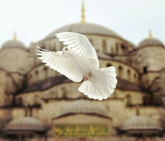 Istanbul photographies