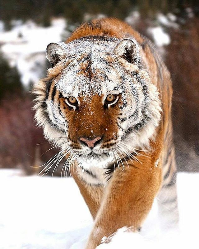Majestic - Photo by @suhaderbent #wildlifeonearth