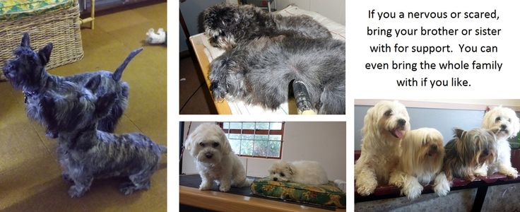 Dog Grooming Hermanus