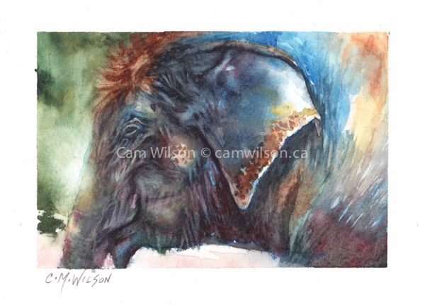 Wisdom - Watercolour on Arches New loose style www.camwilson.ca