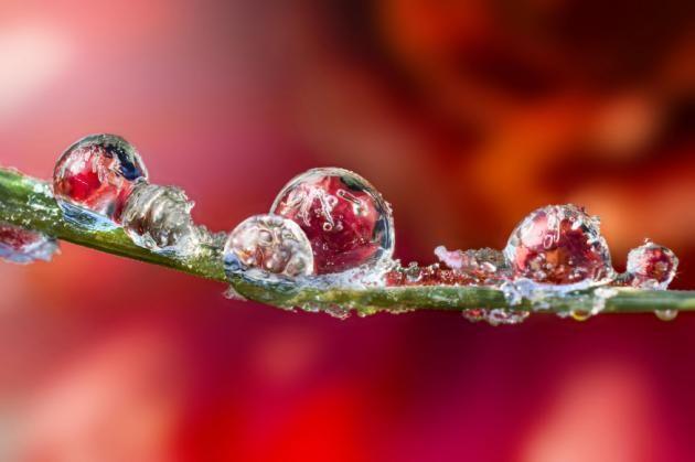 Dew Drops_15